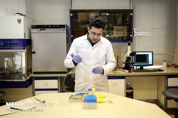 گام محققان ایرانی برای فراوری پانکراس انسان در بدن حیوان