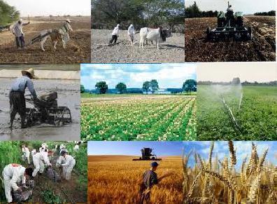 سرمایه گذاری 2 هزار و 150 میلیارد ریالی در بخش کشاورزی استان همدان