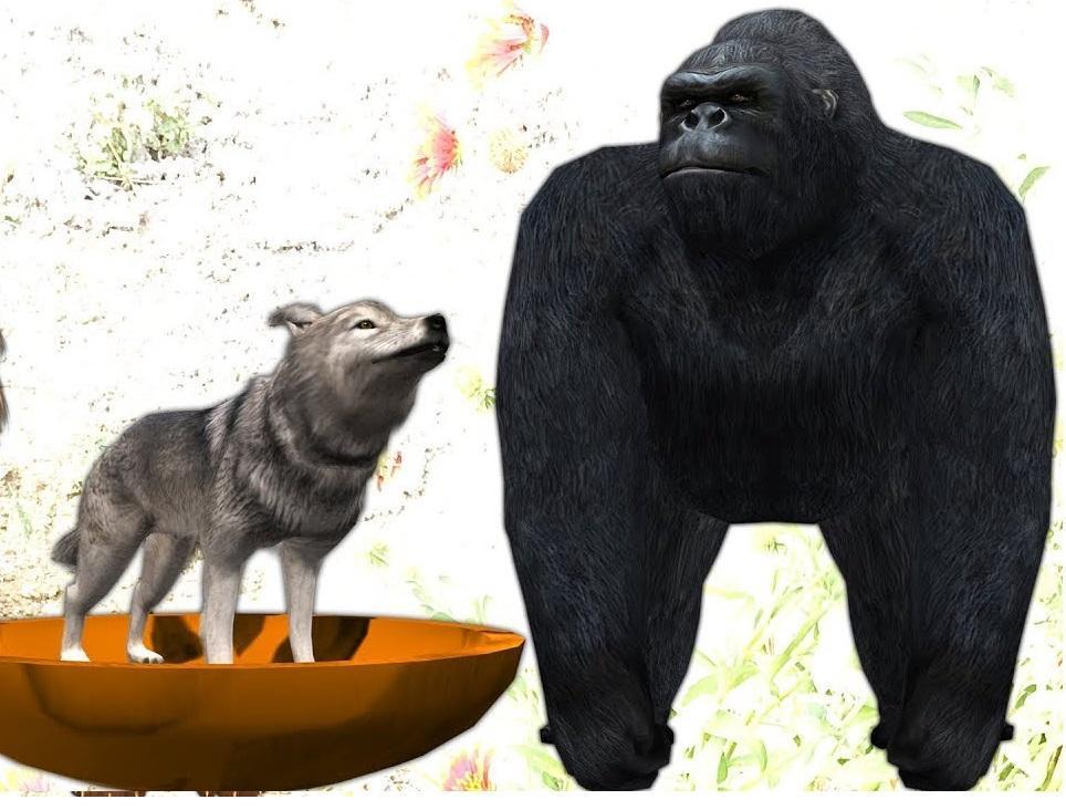 اگر حیواناتی مثل گرگ و گوریل منقرض شوند، چه خسارتی به ما وارد می گردد؟