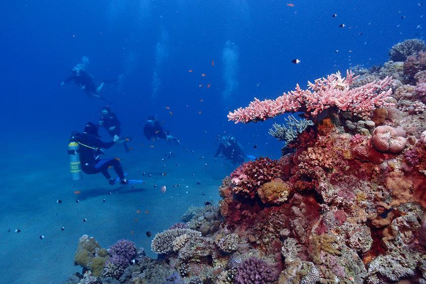 8 مکان غواصی مشهور در تایلند برای عاشقان دنیای زیر آب
