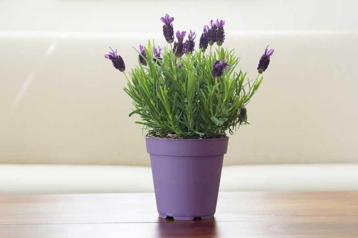 حشرات را با این گیاهان از خانه و محیط اطراف خود دور کنید