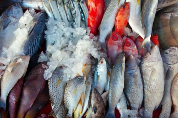 راه تشخیص ماهی پرورشی خوب از بد