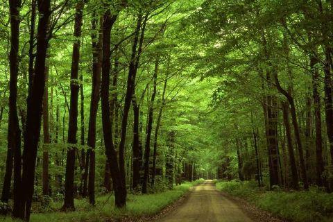 ساحل و جنگل گیسوم؛ نگین گردشگری گیلان