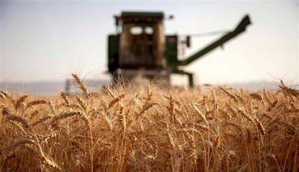 شورای قیمت گذاری نرخ جدید گندم را ابلاغ کرد