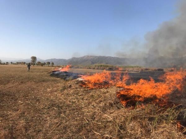 آتش سوزی نیزارهای تالاب بین المللی زریوار مهار شد